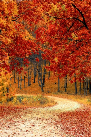Autumn Forest Road  free mobile background