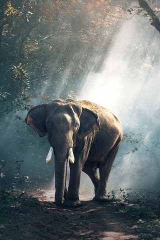Elephant  free mobile wallpapers