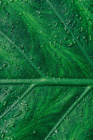 Close-up Green leaf  free mobile wallpapers
