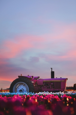 Pink Tractor  free mobile background