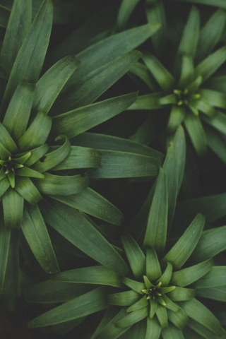 Plant leaves  free mobile background