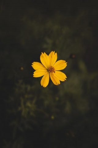 Yellow Flower  free mobile wallpapers
