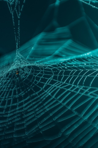 Spider Web Closeup  free mobile wallpapers
