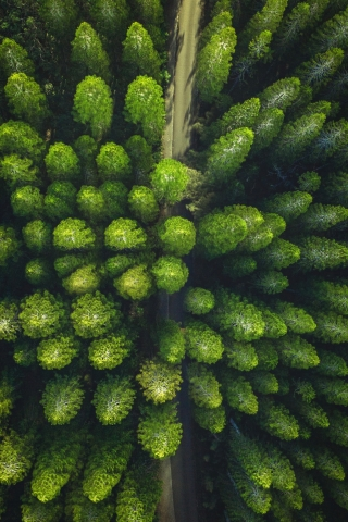 Trees Drone view  free mobile background