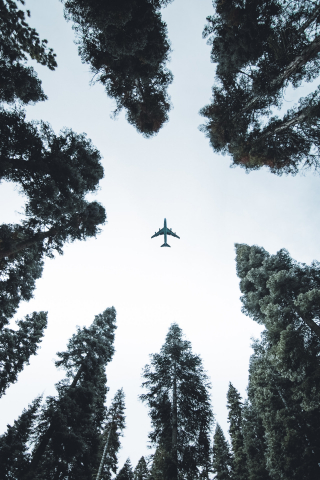 Airplane in the Tree  free mobile wallpapers