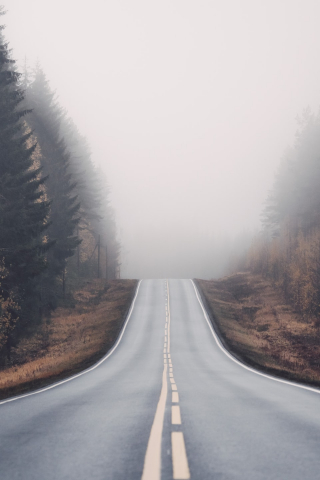 Foggy Road in Forest  free mobile wallpapers