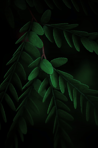 Closeup Green Leaves  free mobile wallpapers
